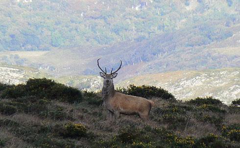 Batidas de ciervo en el coto de caza del Valle de Mena