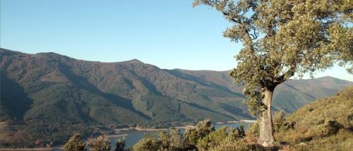 Batidas de jabalí en Ordunte, en el coto de caza del Valle de Mena