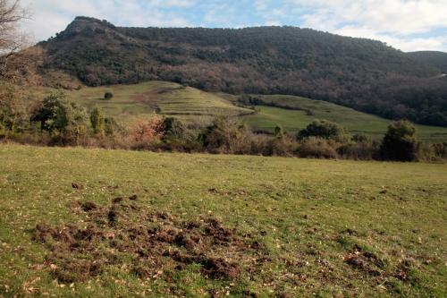 Batidas de jabalí en el coto de caza del Valle de Mena
