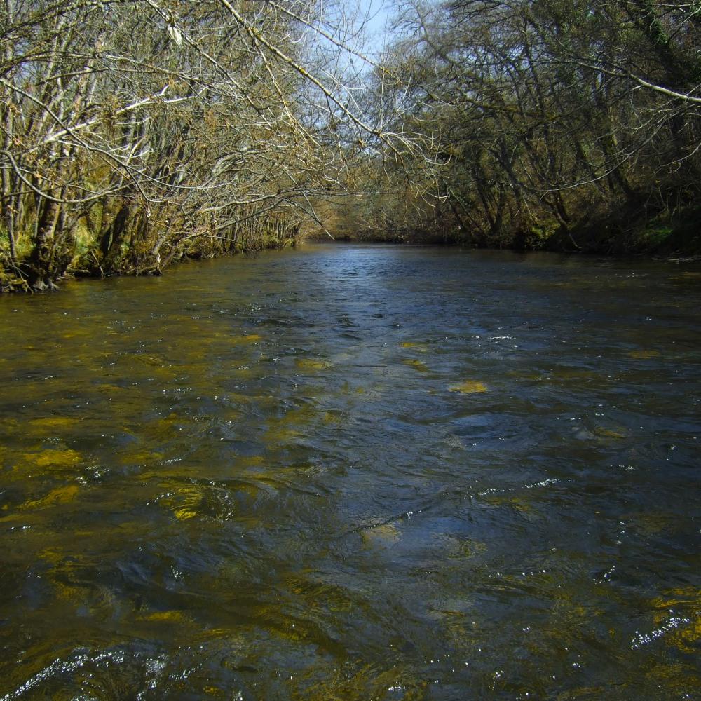Pesca a ninfa en los ríos del norte de Burgos (3/3)