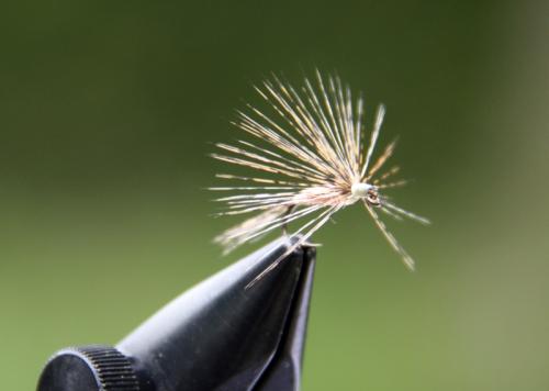 19.- Vista de la mosca ahogada desde otra perspectiva. No os olvidéis de quitarle la muerte al anzuelo en el caso de que aún la tenga