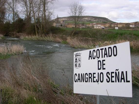 Arranca la temporada de pesca de cangrejos en Burgos (2/4)