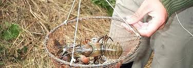 Pesca de cangrejos en Burgos
