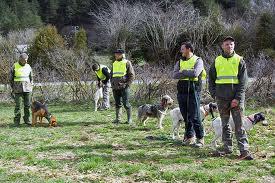 Concurso perros de rastro