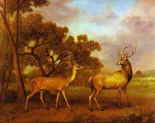 red-deer-stag-and-hind